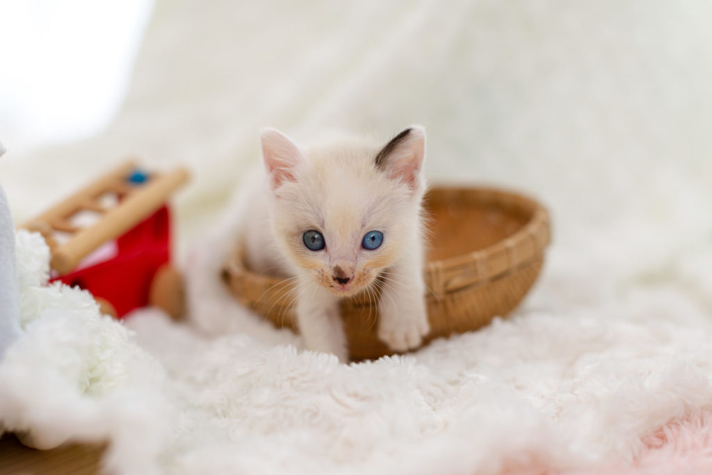 ペット猫イメージ