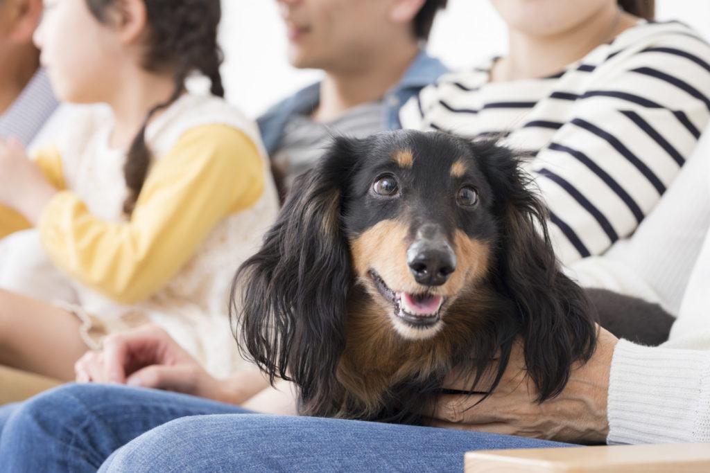 ペット犬イメージ